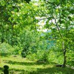 Sommerretreat: Erfahre eine neue Wir Kultur